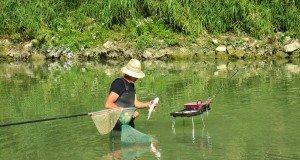 Cavedani nel fiume Tevere